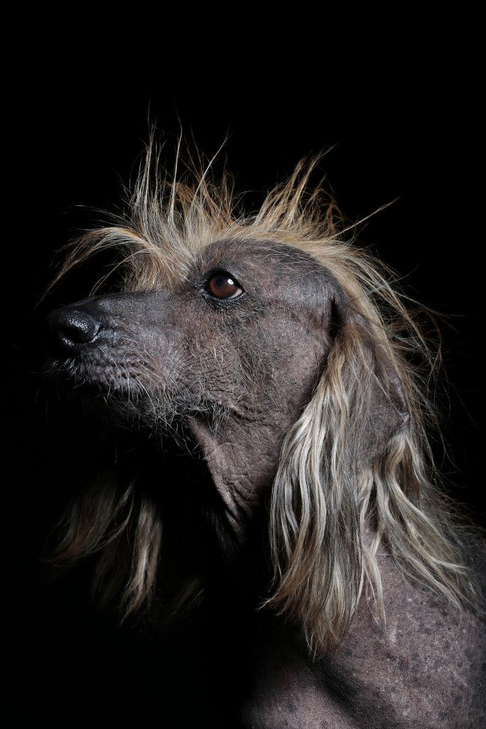 These Are Officially the Ugliest Dogs in the World | WIRED