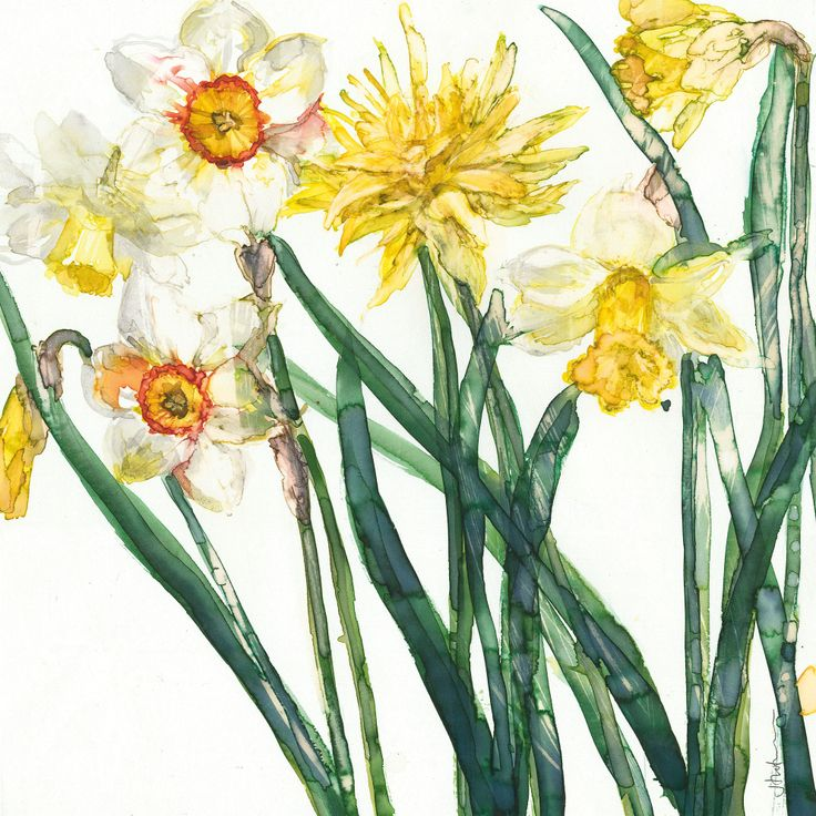 Nacrissus and Daffodil (W405) Floral Greetings Card by Jess Trotman http://www.thewhistlefish.com/product/w405-nacrissus-and-daffodil-floral-greetings-card-by-jess-trotman