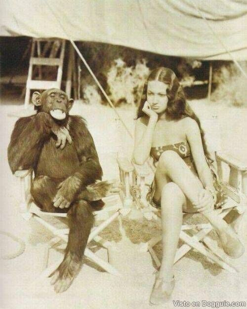 """J Fred Muggs, seen in his younger days, between takes on a Tarzan film. The girl played an """"African"""" native. These films got flak even in the 1930s for their portrayals of black folk. Since the Tarzan flicks were shot in Hawaii and Burbank, the """"natives"""" were Asian, not usually """"African."""" J Fred lived to an old age in Hollywood, much as any old-timer. He preferred the company of humans. He sat by the pool, smoking cigars as an """"old guy."""""""