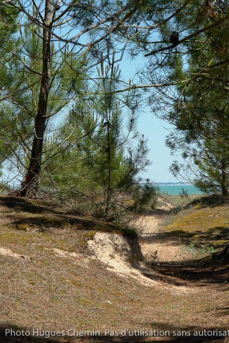 Forêt de Boyardville; Ile d'Oléron  ©  Hugues CHEMIN http://www.oleronmag.com/