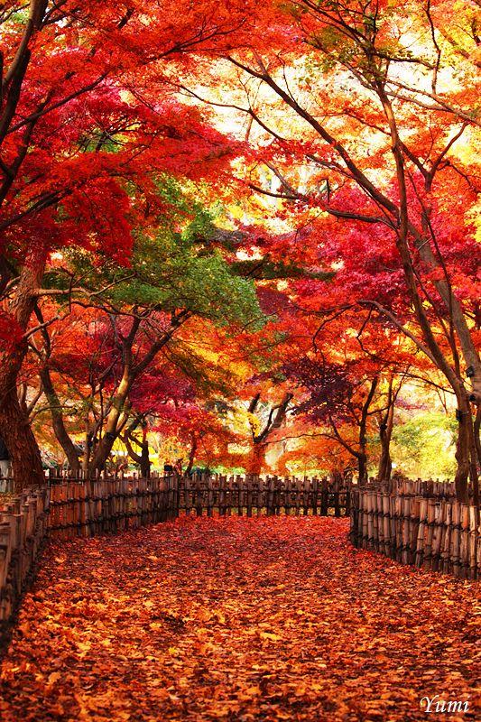 // Les Paysages Asiatiques / Glamorous path - Autumn in Jindai Botanical Garden, Chofu, Tokyo, Japan