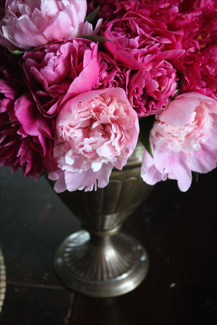 Розовые пионы pink peonies