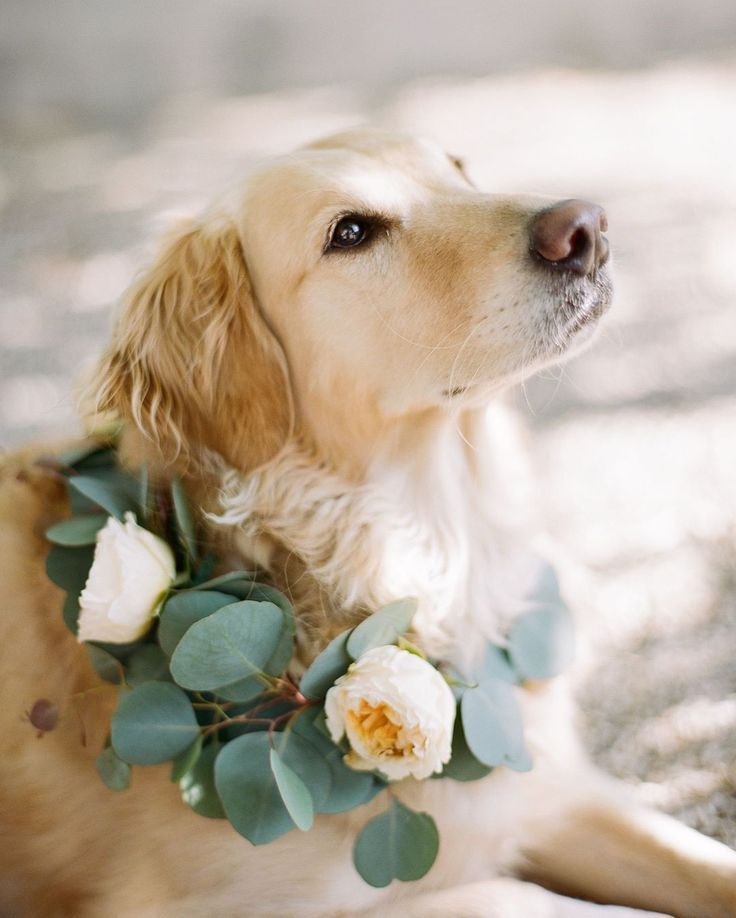 Pin On Pets In Weddings