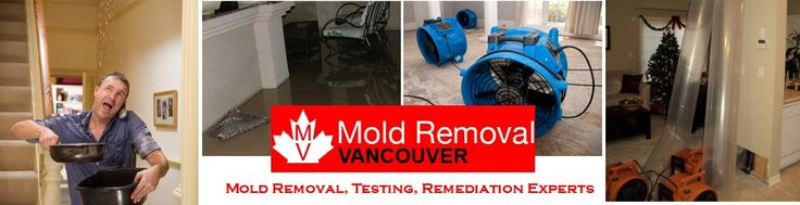 Solving the problem of mold with the best mold inspection Vancouver experts