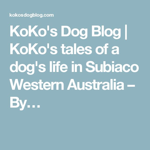 KoKo's Dog Blog | KoKo's tales of a dog's life in Subiaco Western Australia – By…