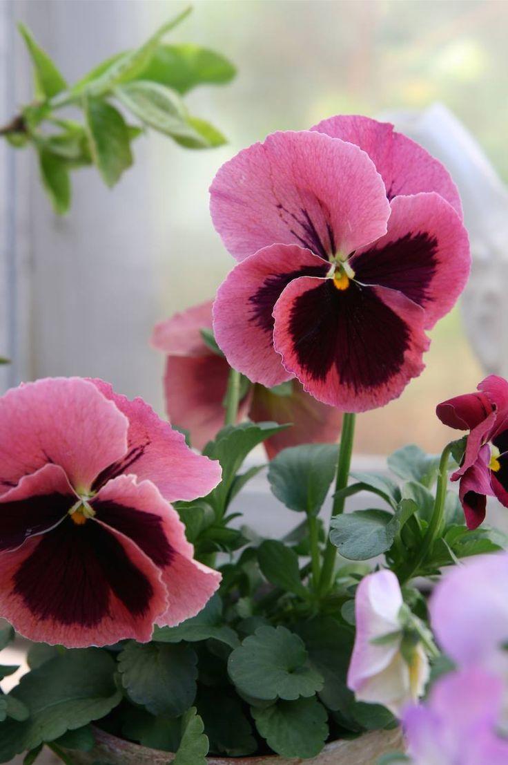 385 Best Floral Lee Images On Pinterest Flower Pictures Pink