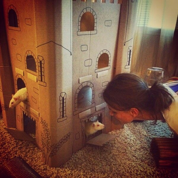 My little princes have a castle of their own! Pet rats are wonderful indeed!