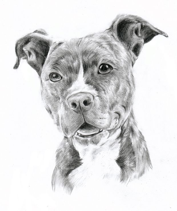 how to draw dog hair in pencil