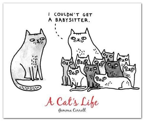 A Cat's Life Greeting Card Box Set – The Bullish Store - #catlady #greetingcards #cards #gift  #cats