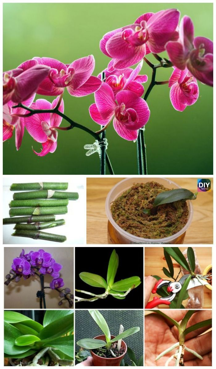 How To Grow Orchid At Home So Easy Growingorchids How To Grow Orchid At Home So Easy Growing Orchids Orchid Soil Orchids