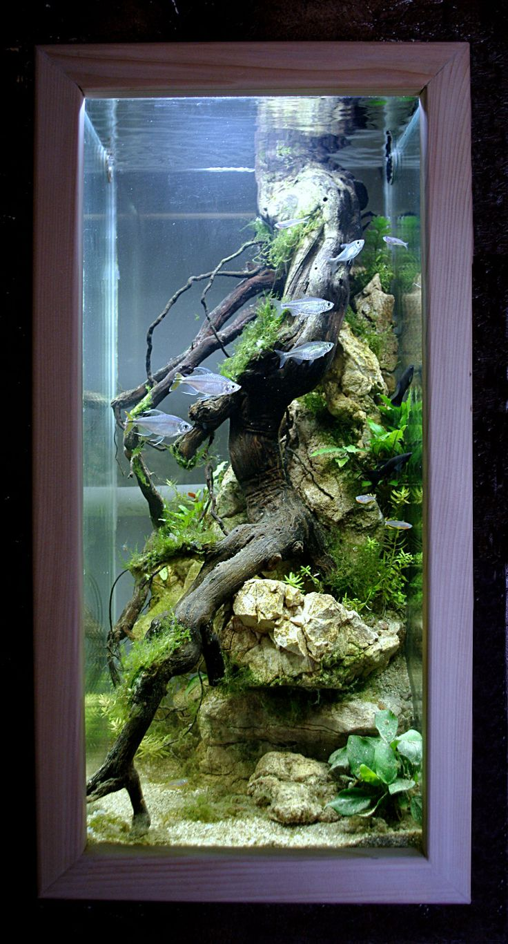 aquarium colonne design biotope africain folies aquatiques pinterest aquarium colonne. Black Bedroom Furniture Sets. Home Design Ideas