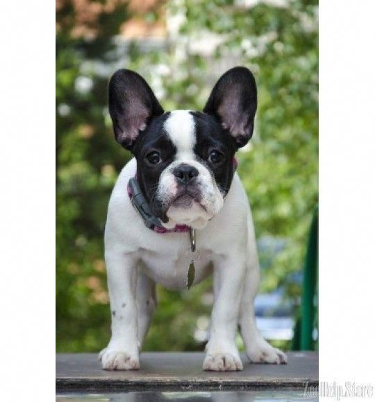 Determine More Information On Bulldogs Have A Look At Our Website