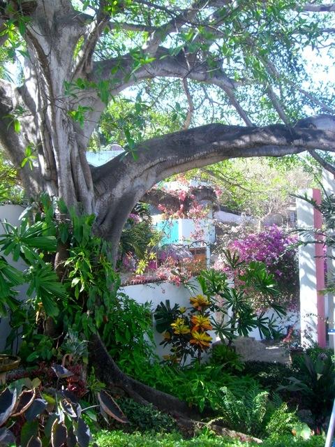 Les 25 meilleures id es de la cat gorie jardin mexicain for Jardin en espagnol