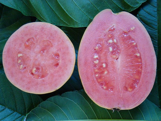 """Step 2 """"When you bite into a ripe Guava,your teeth must grip the bumpy surface and sink into the thick edible skin without-hit ting the center.""""This show when she frist bite in to the guava how feel when she taste it taste so good to herb."""