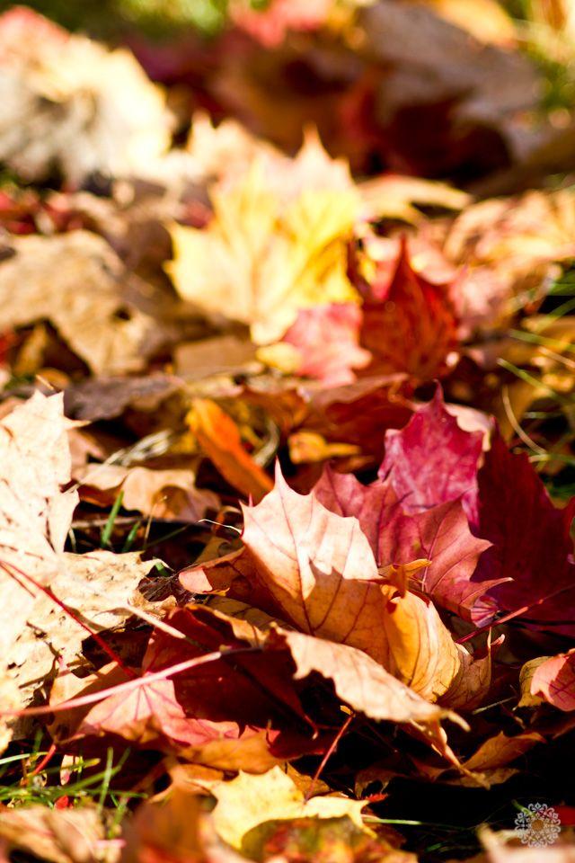 autumn-red-2013_rumiram