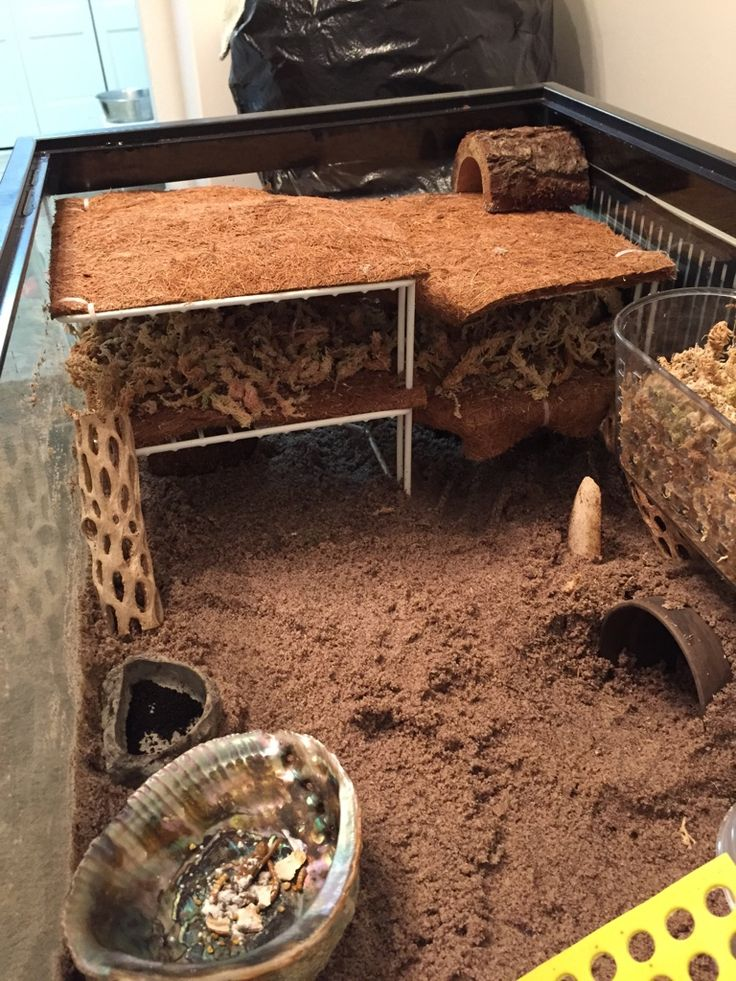 HCA: Hermit Crab Association • View topic - Ok, here goes :-)