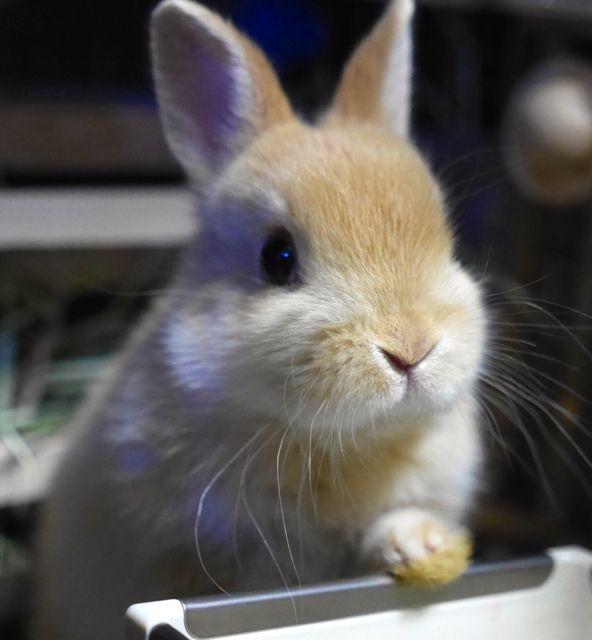 Dear little bunny