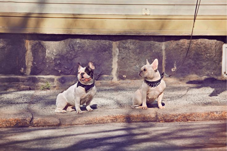 Collection for Dog collars: Kaulus and Pitsi http://minji.fi/