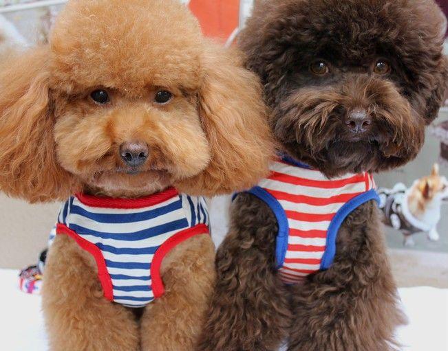 Little Pet Planet - Gondolier Anchor Striped Pet Dog Harness US$18.99