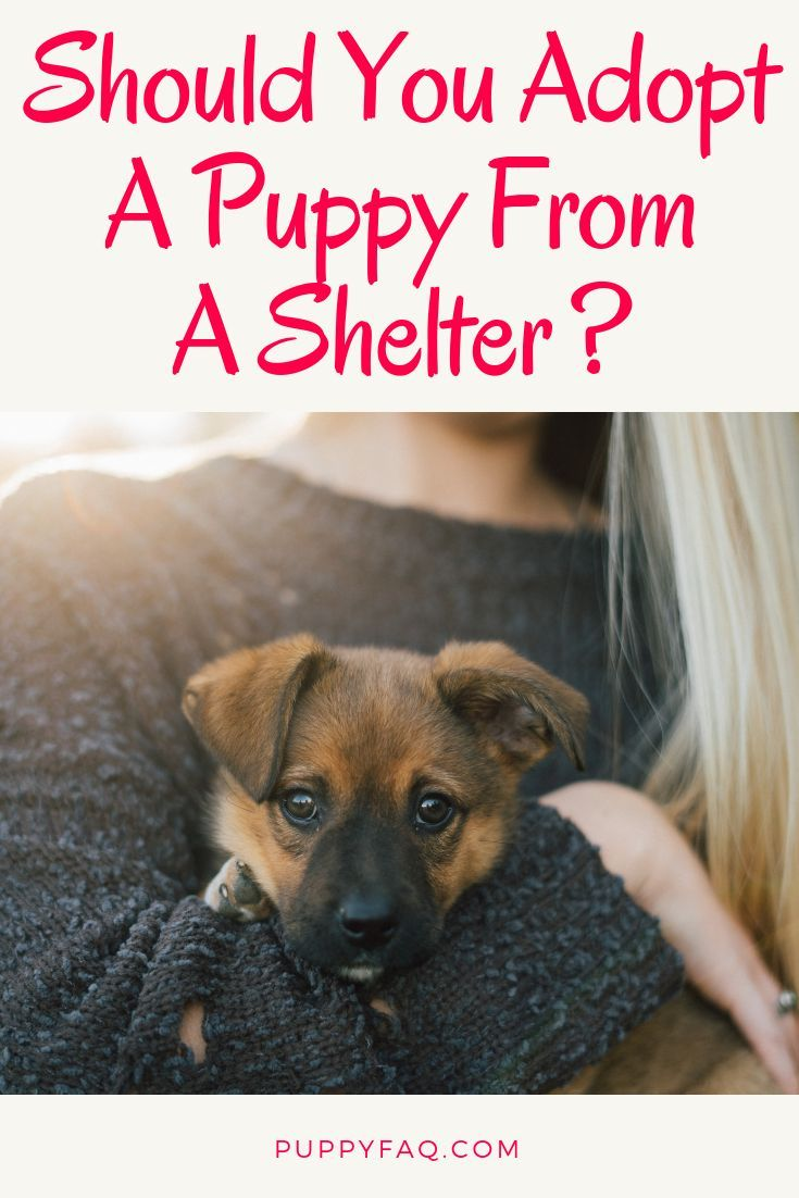 You Could Buy A Purebred Dog From A Reputable Breeder But You Don T Have To Do That Adopting A Puppy From A She Shelter Puppies Puppy Adoption Rescue Puppies