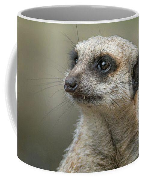 Meerkat Coffee Mug featuring the photograph Meerkat Model by Racheal Christian