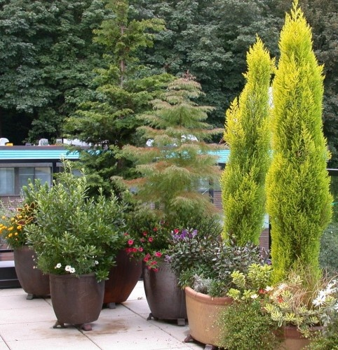 Container Gardens Design Pictures Remodel Decor And