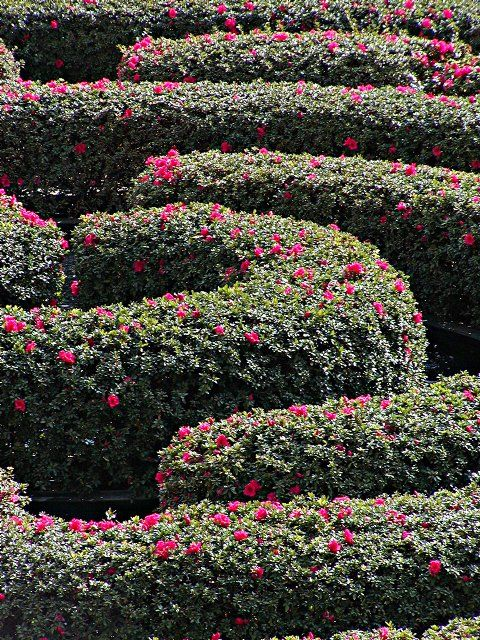 128 best Hedge Mazes & Labyrinths images on Pinterest | Labyrinths Flower Garden Designs Labyrinth on 6 path labyrinth designs, finger labyrinth designs, greenhouse garden designs, stage garden designs, walking labyrinth designs, rectangular prayer labyrinth designs, spiral designs, simple garden designs, heart labyrinth designs, meditation garden designs, new mexico garden designs, labyrinth backyard designs, informal herb garden designs, school garden designs, indoor labyrinth designs, knockout rose garden designs, shade garden designs, water garden designs, dog park designs, christian prayer labyrinth designs,