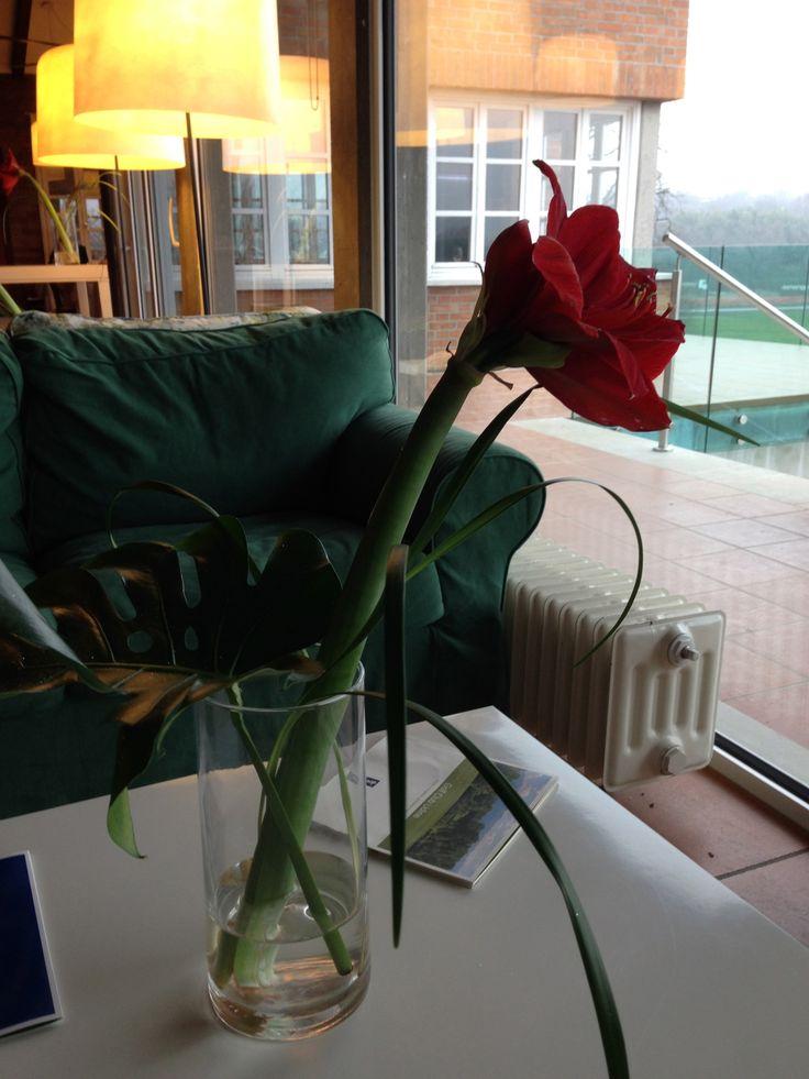 Flowers in Club House, Golf Club Udine - Villaverde Bar&Restaurant, Fagagna, Italy.