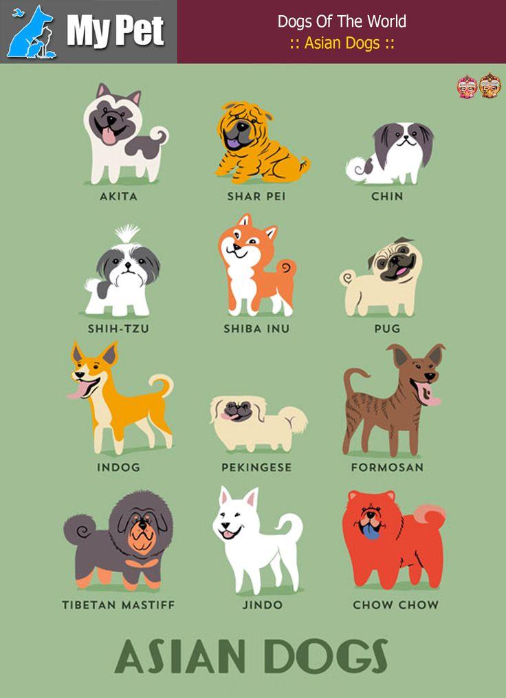 :: Asian Dogs ::  From ASIA: Akita (Japan), Shar Pei (China), Chin (Japan), Shih-Tzu (China), Shiba-Inu (Japan), Pug (China), Indog (India), Pekingese (China), Formosan Mountain Dog (Taiwan), Tibetan Mastiff (Tibet), Jindo (Korea), Chow Chow (China).  #MrbigninkPage #KunLhingJingleBell