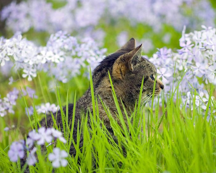 The hunter in a field of flowers