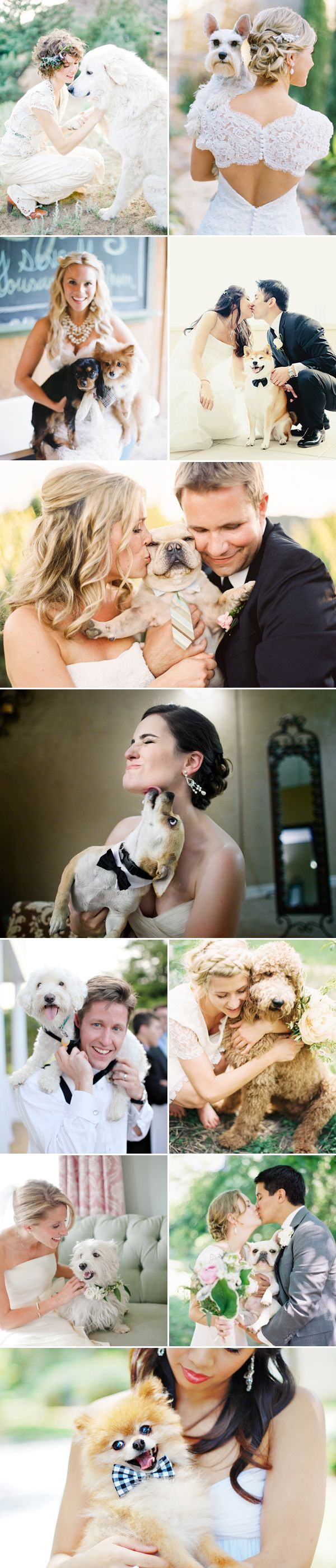 Para finalizer el día con una sonrisa, nada mejor de la compañía de tu mejor amigo! #Dogs @Wedding Sophisticate #melinarojasdeco 27 Adorable Wedding Dogs - so much love