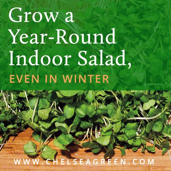 Grow A Year Round Indoor Salad Garden Even In Winter Indoor