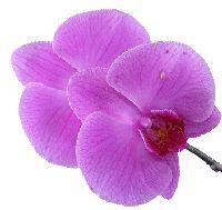Poradna pro pěstování orchidejí: Proč nekvetou?- Pokojové rostliny
