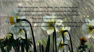 Gânduri: Cele zece porunci ale lui Octavian Paler