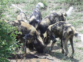 Hoedspruit Endangered Species Centre Mpumalanga