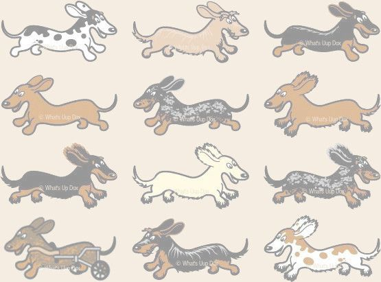 Check out http://whatsupdoxdachshundshoppe.com!  Hit the beach or pool in Dachshund style with Dox-Sun beach towels featuring our original wiener dog artwork. Exclusive item. Available in 4 colors.