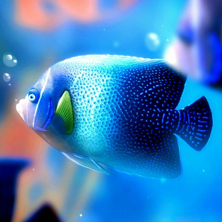 Tropical Fish Under The Sea Pinterest Tropical