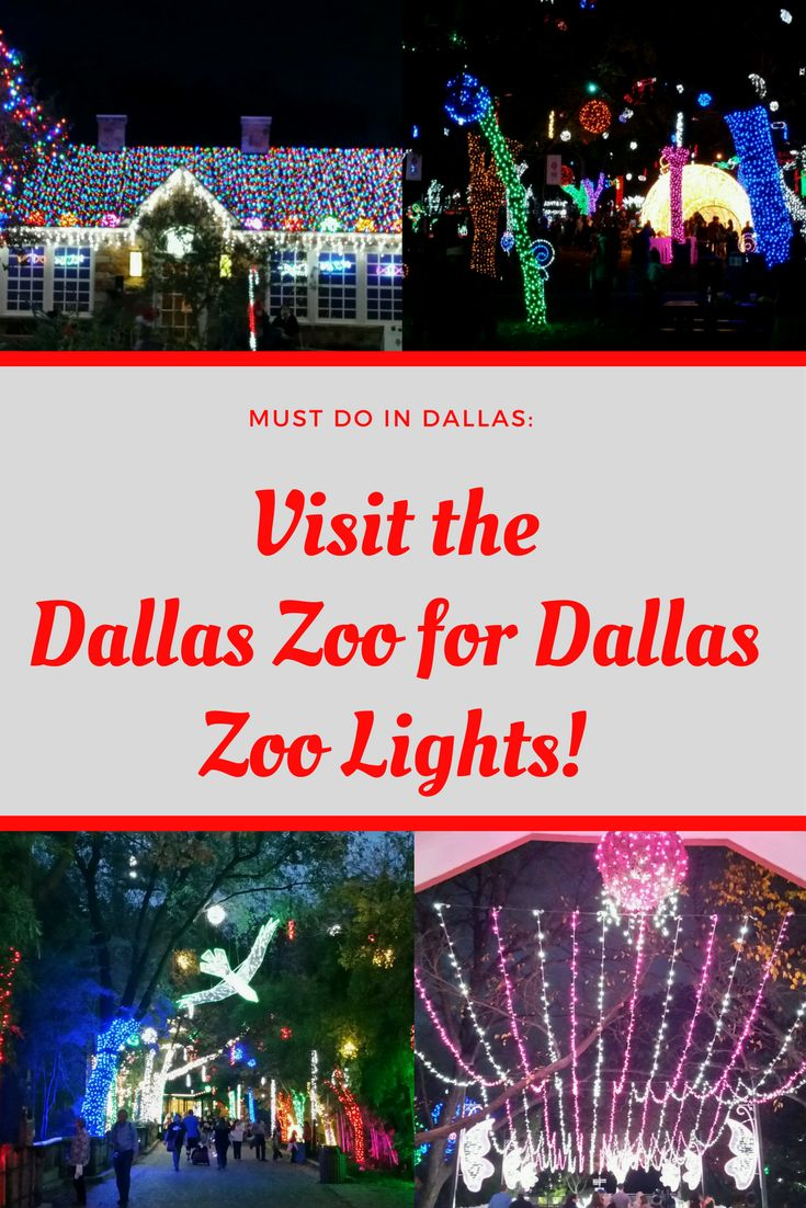 I just visited the Dallas Zoo for Dallas Zoo Lights and it was incredible!  So festive and beautiful.  Check out my review #dallas #zoo #Dallaszoo #christmas #holidays #festive #lights #ChristmasLights