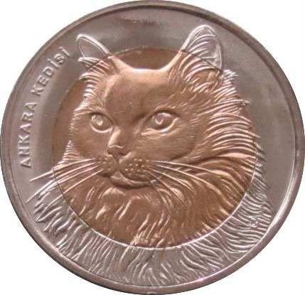 картинка награда кошки размещения объявлений указаны