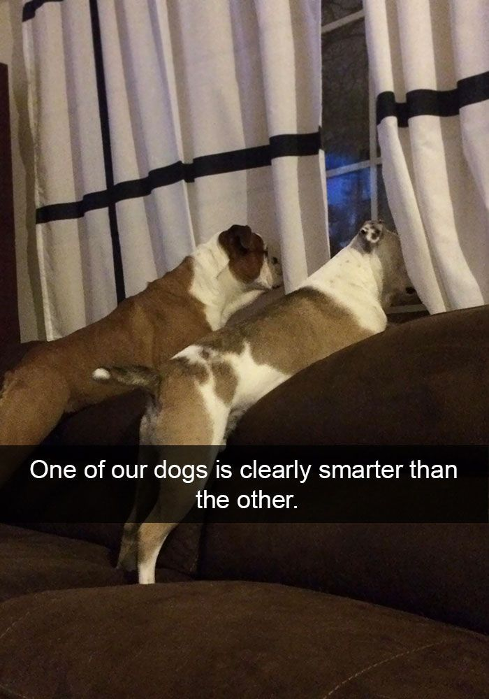 18 Hilarious Dog Snapchats That Are Impassible Not To Laugh At