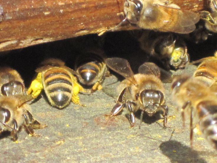 how to build a simple beehive