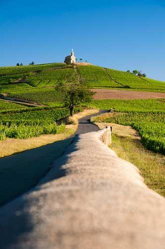 Dans la continuité du vignoble Mâconnais, au nord de Lyon, partez sur la route des vins du Beaujolais http://www.vinotrip.com/fr/route-des-vins-beaujolais  Les rouges fruités et les blancs savoureux seront vos compagnons de route ! #beaujolais