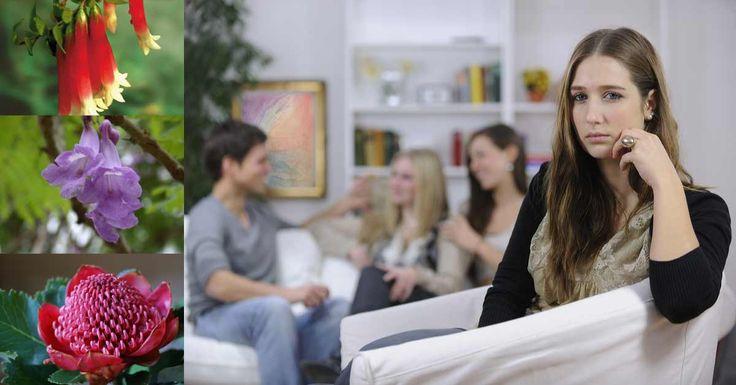Ansia sociale: come possono essere d'aiuto i Fiori di Australiani ?