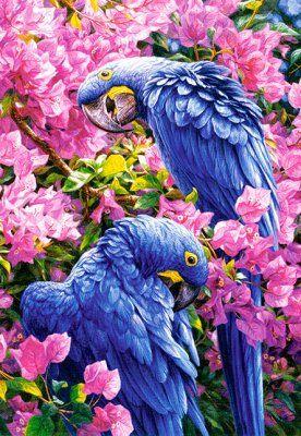 Puzzle Castorland 1000 Blue Parrots