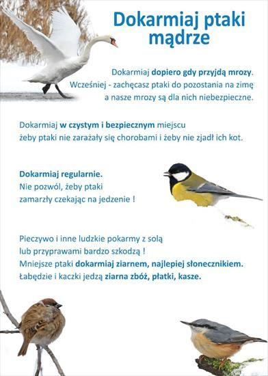 ZWIERZĘTA zimą - dokarmianie ptaków1.JPG