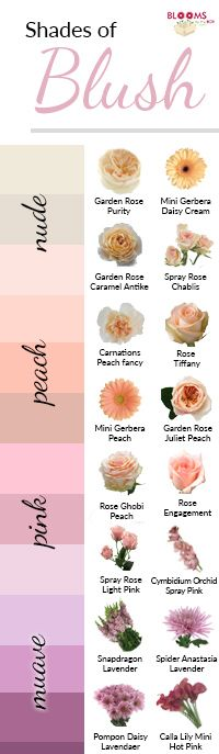 While all shades of blush are beautiful, they can range from nude, peach, pink or mauve tones, it can get a little confusing. We've put together a few examples to help pick out your perfect shade of blush and find flowers that match your blush wedding!