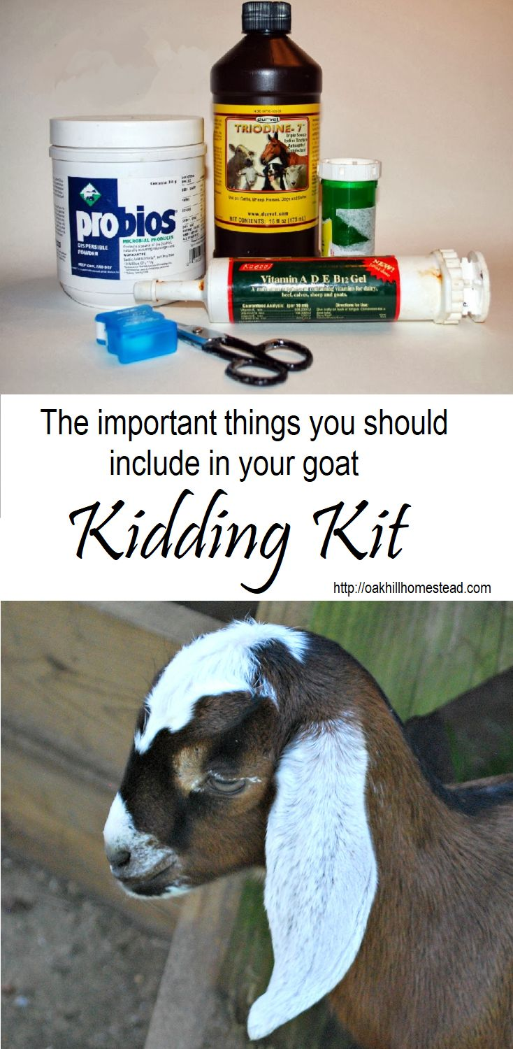 What to include in your goats' kidding kit, from Oak Hill Homestead