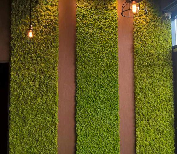 Skandináv tartósított zuzmófal egy elegáns étterem falait díszítik