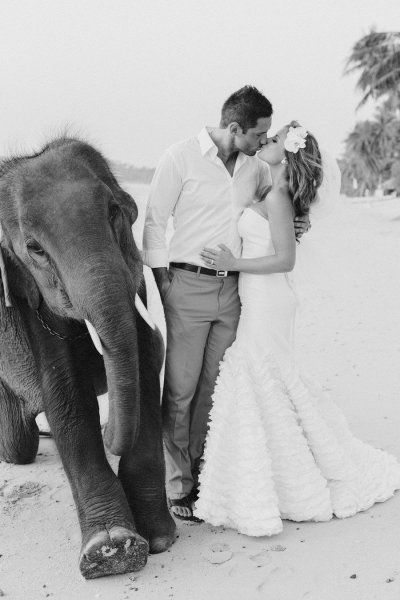 I want to get married with a baby elephant!!!!