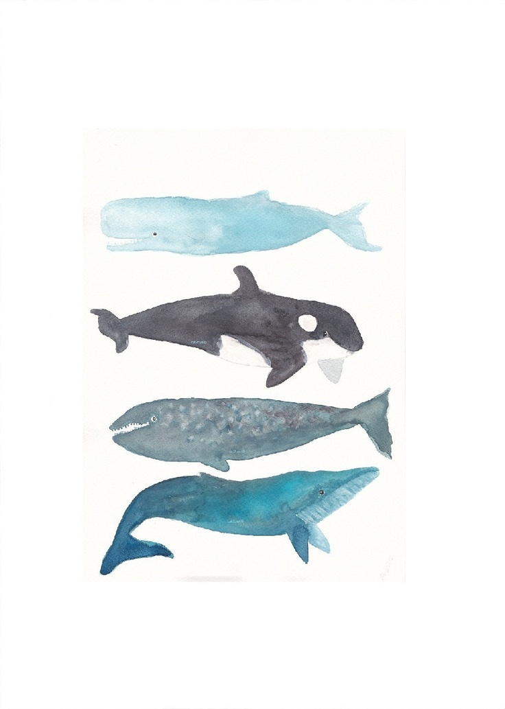 Whales - A Whale Collection - Blue, Orca, Gray, Humpback Whales -